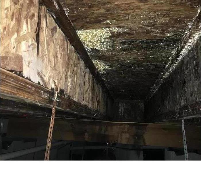 Mold In N. Ft. Wayne: SERVPRO To The Rescue!
